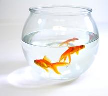 Goldfish Bowl Image