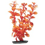 Red Ludwigia Plant: Halloween Themed Aquarium