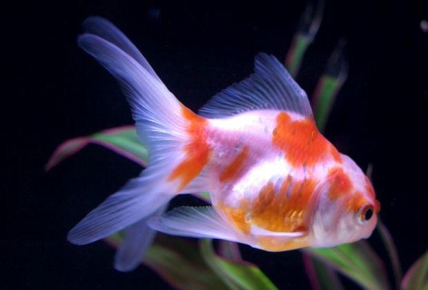 Aquarium test kits promote good water quality