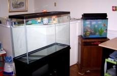Glass Goldfish Tank Image