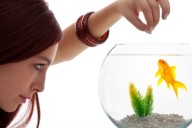 Feeding Goldfish: The Ultimate Goldfish Food Guide
