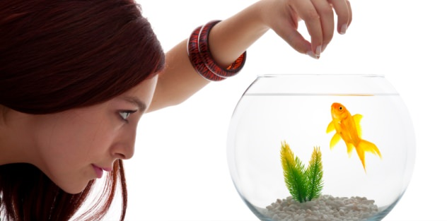 Goldfish food and feeding the ultimate guidecomplete for How to feed fish
