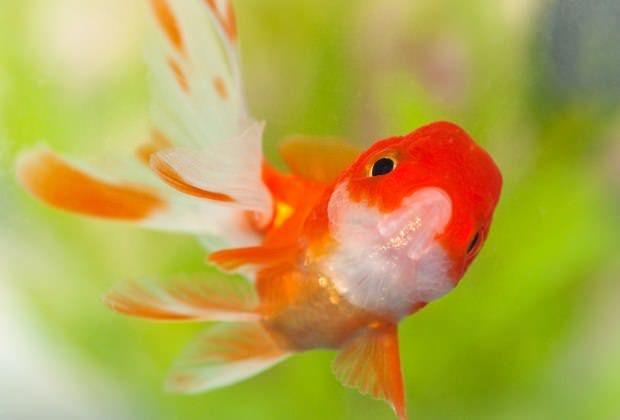How to Use Aquarium Salt: An Aquarium Salt Treatment